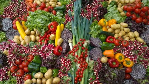 distributor sayuran hidroponik